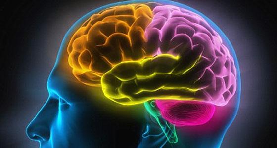 Gamblers brain